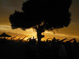 our famous tree at sunset!